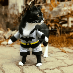He is the dark whiskered knight. Litter boxes fear him. Mice hate him... but we love him! Meet Batman Superhero Cat, the caped crusader of the streets of Europe.