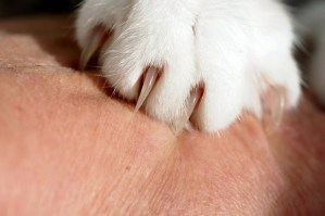 Does anyone actually enjoy trimming their cat's nails? Here are three methods for trimming your cat's nails and how to use them. We'll also tell you which is the best one - just keep reading!