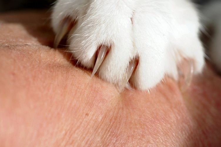 caring for cat claws