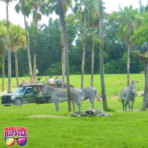 Safari Tour at Busch Gardens