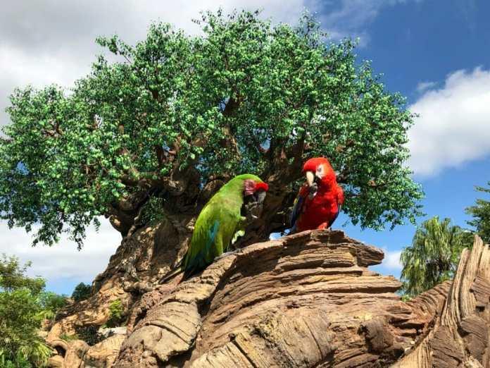 Birds at the Tree of Life in Disney's Animal Kingdom