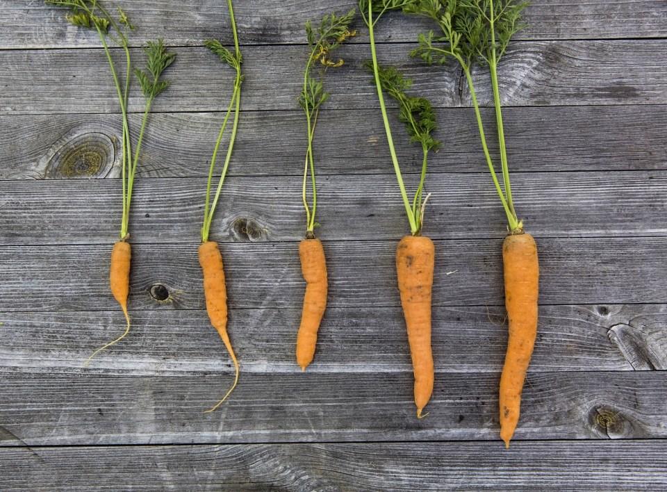 come creare un orto in giardino