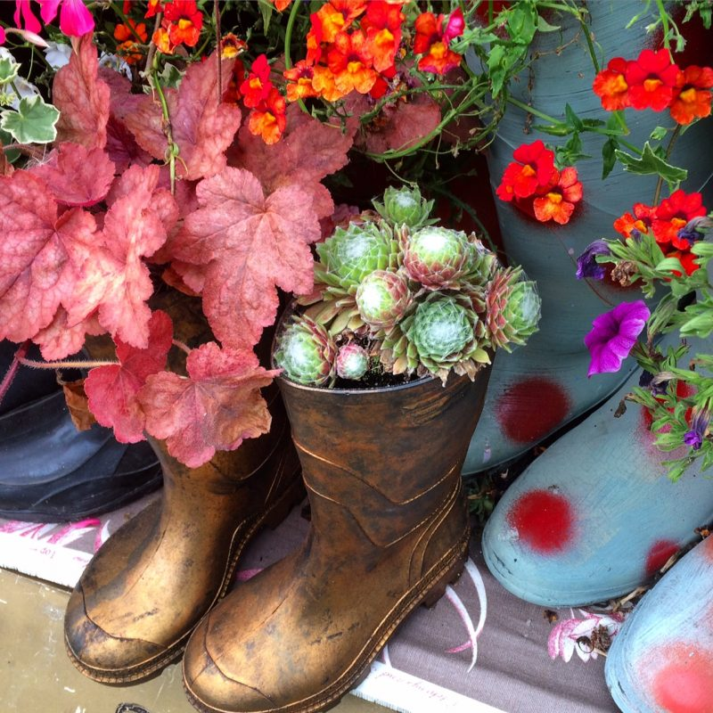 Wellie boot planters