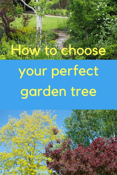How to find out which garden tree is perfect for your garden.
