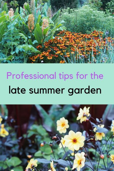 Professional tips for late summer garden colour
