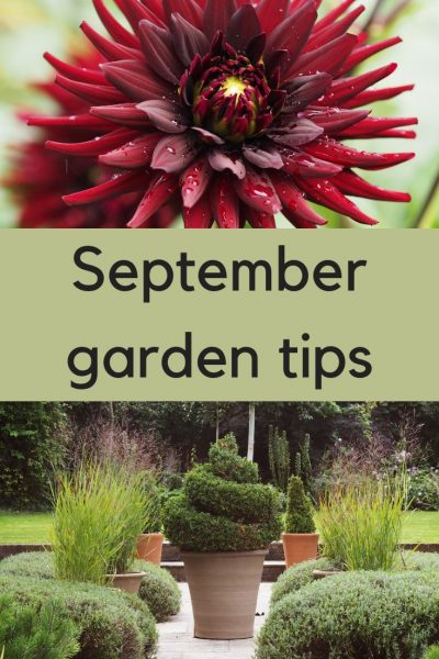 Do you make these 7 mistakes in your September garden?