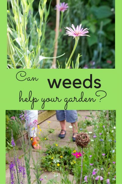 A new trend for weeds in the garden?