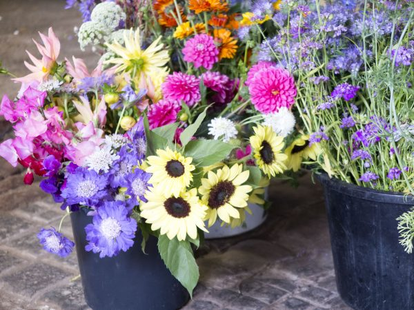 Buy flowers from local growers