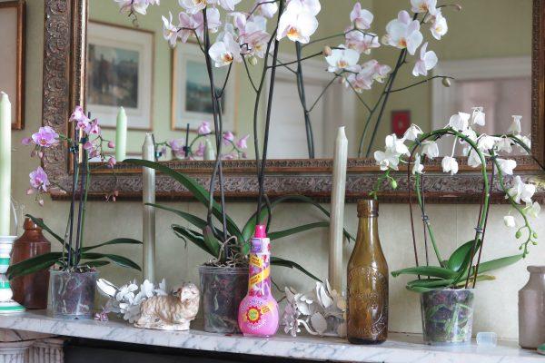 Baby Bio Orchid Feed & Mist