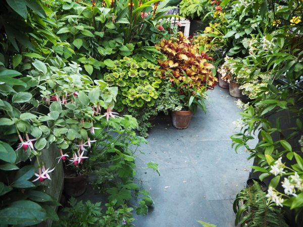 Choose tall, large leafed plants for privacy