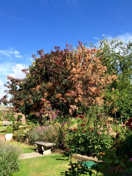 Diagnose tree health problems online