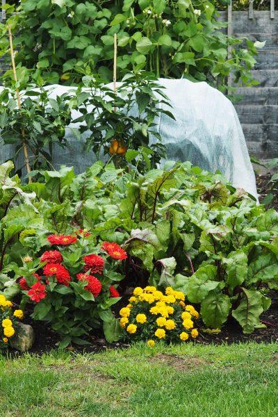No dig veg in a small garden