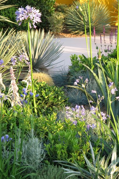 Add spiky plants to update your garden