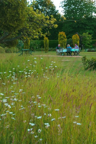 Easy tips for a wildflower meadow in your small garden #gardentips #wildflowers