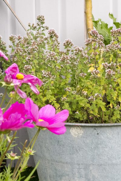 Grow herbs on a roof terrace