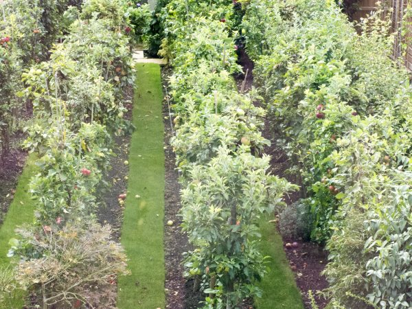 Fill even a small garden with apple trees