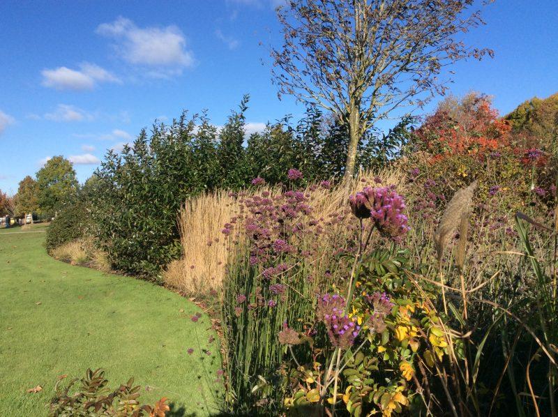 Autumn border at RHS Hyde Hall