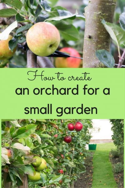 How to create an orchard for a small garden