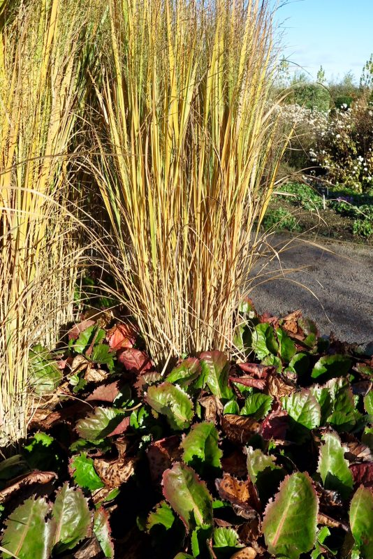 Contrast shape and size in your winter garden