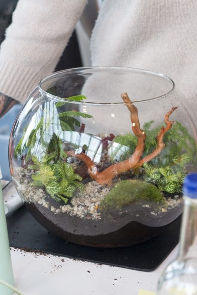 Terrariums are back