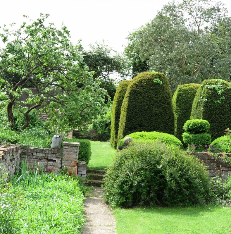 How to restore a yew