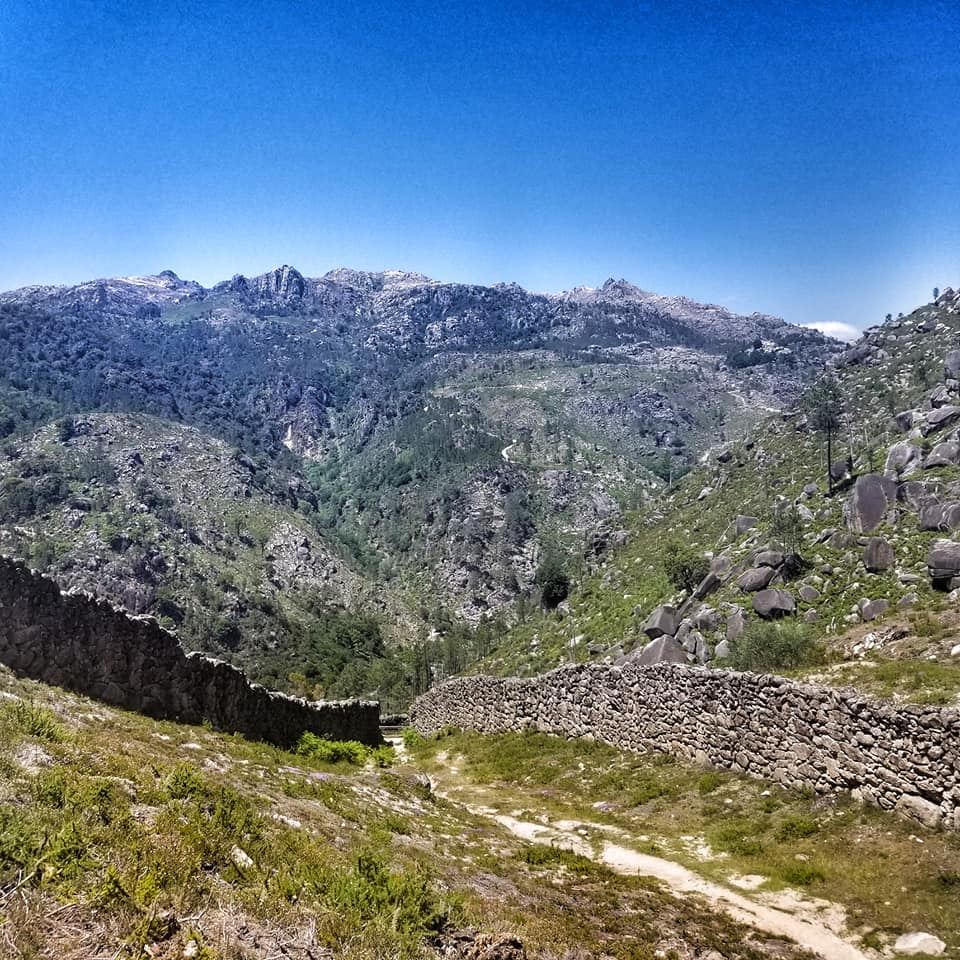 Wolf trap in the Portuguese mountains.
