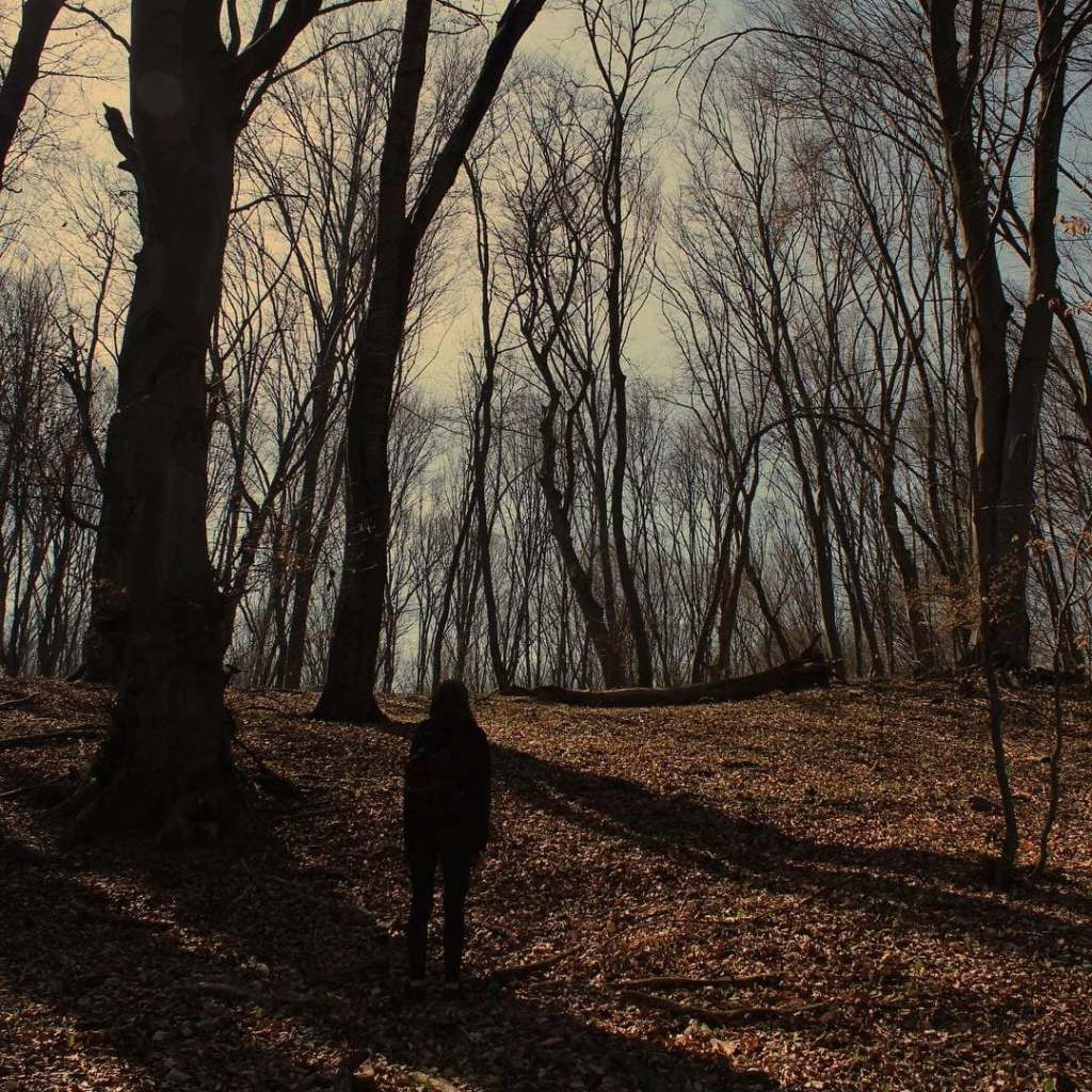 Silhouette of a woman amid many bare trees in Hoia-Baciu Forest.  One of the most haunted forests in the world in Cluj-Napoca, Romania