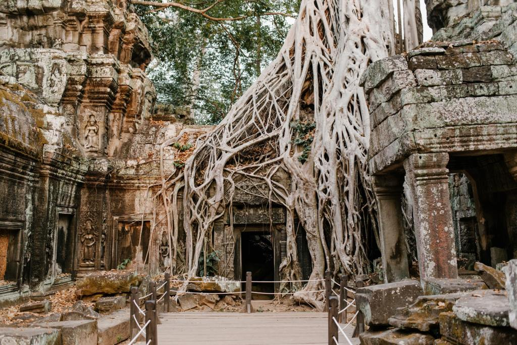 Tree branch and root overgrown Angkor Wat Temple in Cambodia.