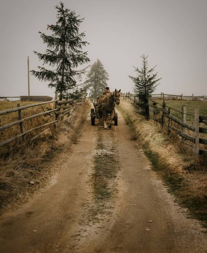 Horse drawn carriage in a Romanian village coming down a dirt road facing the camera