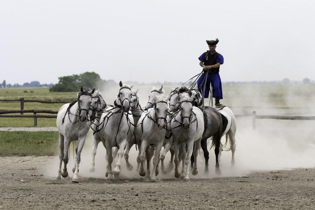 Hungarian horseman with horses riding in Puszta, Hungary.