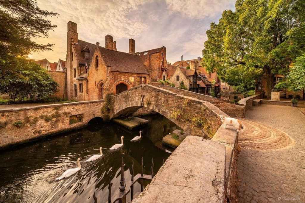 Bridge over a canal in Bruges with swans swimming underneath.