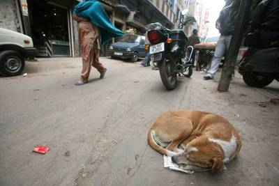 Dog on road - The Key Turned fiction