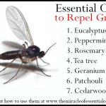 7 Repellent Essential Oils for Gnats