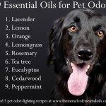 9 Refreshing Essential Oils for Pet Odor