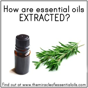 How Are Essential Oils Extracted?