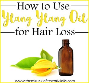 How to Use Ylang Ylang Oil for Hair Loss