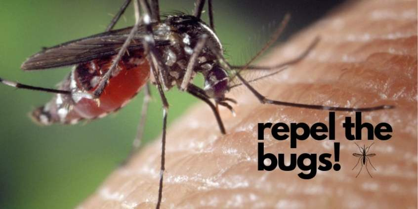 repel the bugs