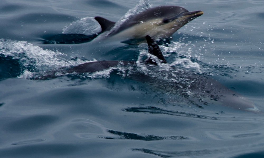 Aboard Captain Dave's Manute'a Safari: Sea Lions, Dolphins & Whales…Oh My!