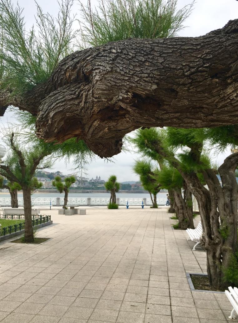 tamarisk-trees-san-sebastian