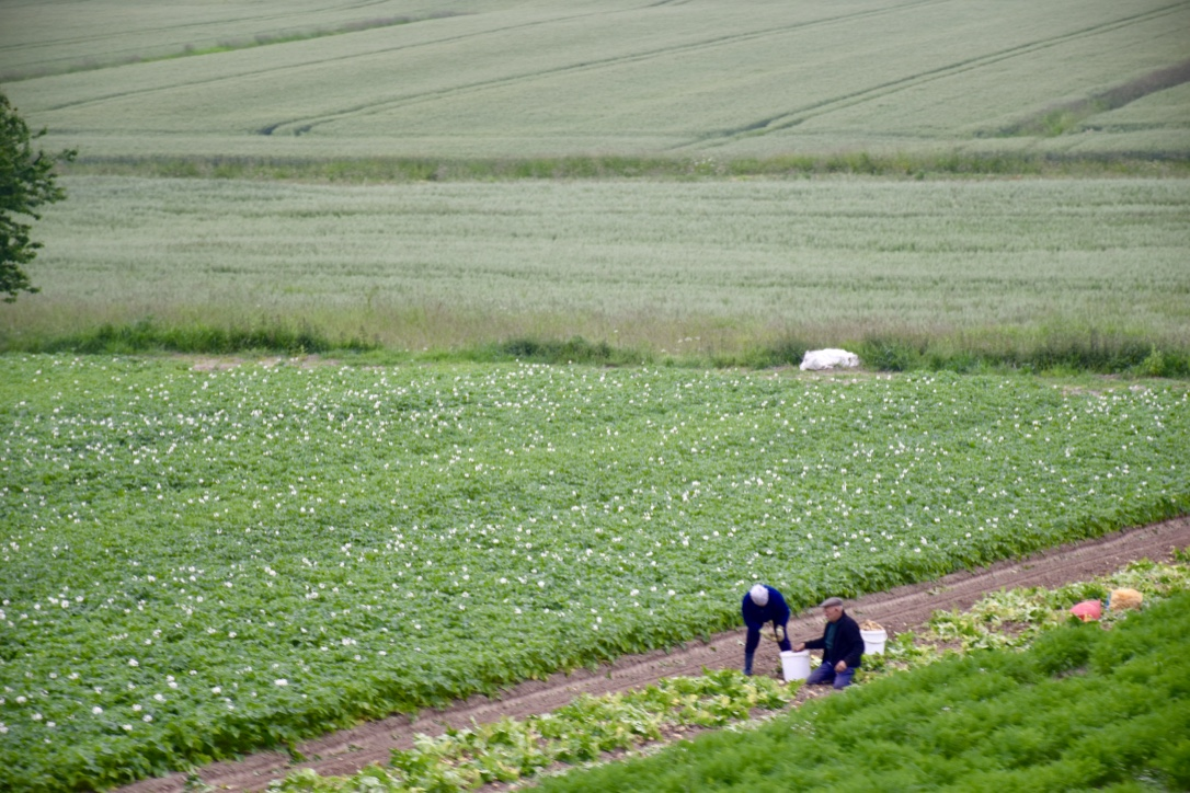pontorson france fields