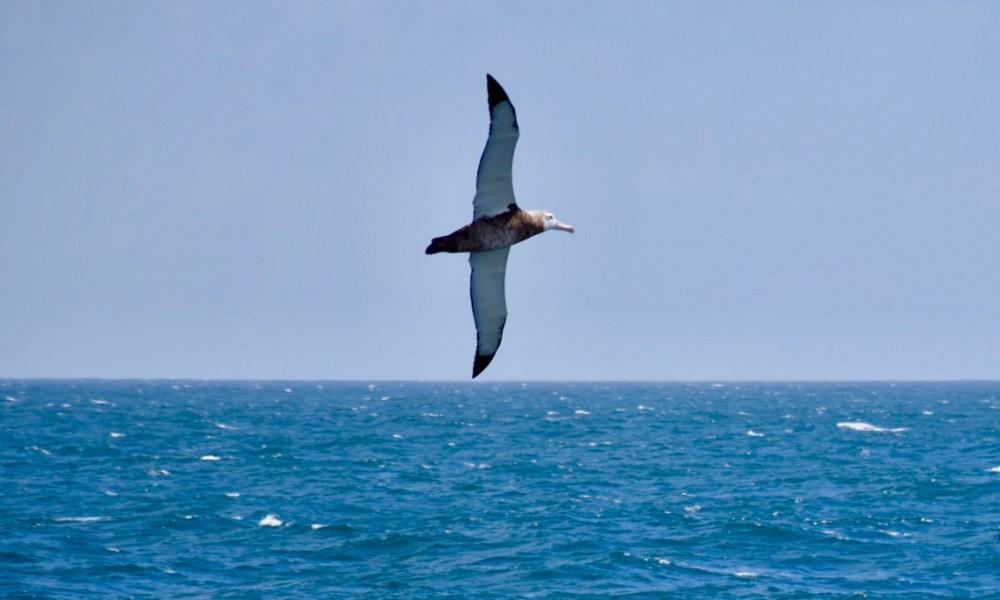 Chilean Patagonia: The Great Albatross & Cruising the Strait of Magellan