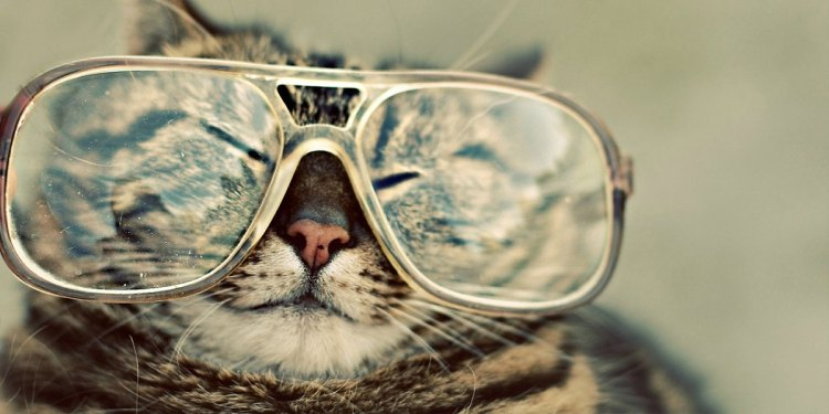 hipster phone background the modern hippie portland oregon cat glasses