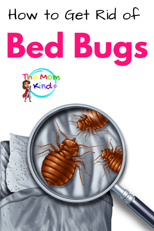 How to Get Rid of Bed Bugs  Have you find blood spots on your bed sheets and bite marks on your skin? These could mean you have a bed bug infestation at home. Fear not! Here are some safe and effective ways to solve this problem once and for all.