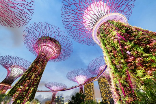 Singapore is an incredible family travel destination with fun things for all ages. Discover the top things to do in Singapore with kids #travel #travelwithkids #kidstravel #singapore