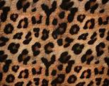 Leopard- Rosettes with no spots in the middle.