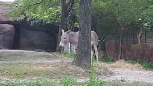 St. Louis Zoo - Swasses