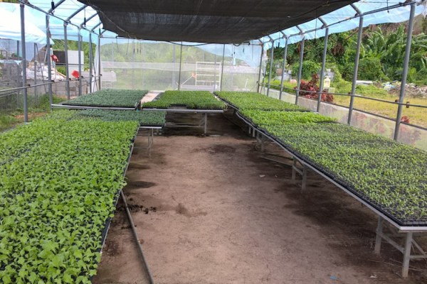 Dominica recovery helped by 130,000 seedlings | The ...