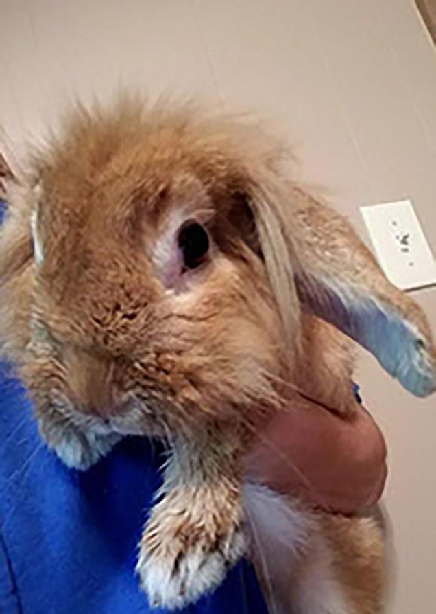 Buzzy the Bunny