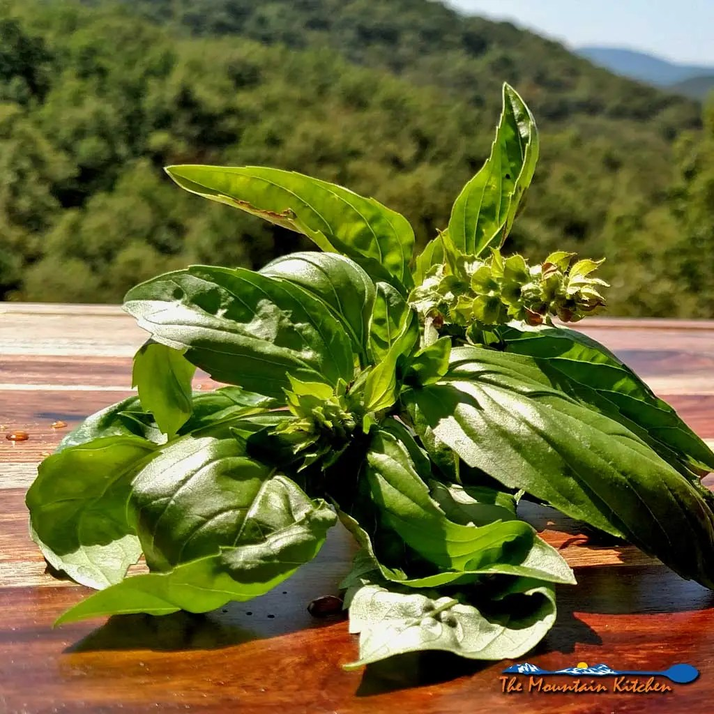 4 Ways to Preserve Basil For the Winter Months {The Mountain Kitchen Tips
