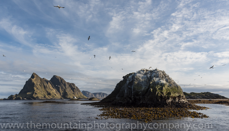 The Gannet colony to the south of Lofoten